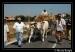 Festa_dellla_Trebbiatura_2010_Montenero_di_BisacciaD30_6349.jpg